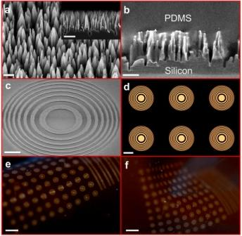 Tiny silicon nano-wire towers make up dark regions of the flexible Fresnel zone lenses. Each individual lens resembles a bullseye of alternating light and dark. Arrays of lenses formed within a flexible polymer bend and stretch into different configurations.  Photo Credit: Hongrui Jiang
