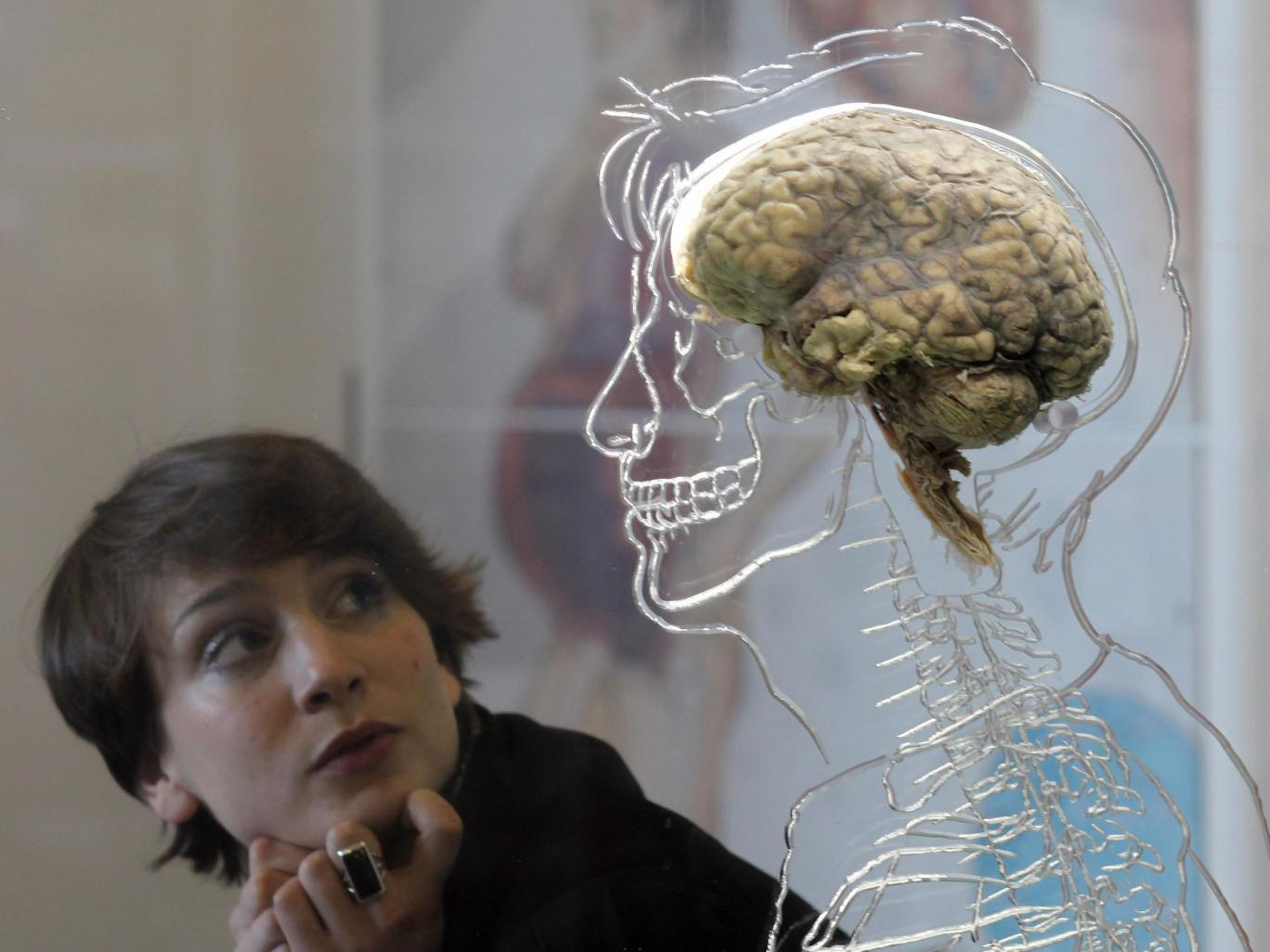 A woman looks at a human brain at an exhibition in Bristol Matt Cardy/Getty Images