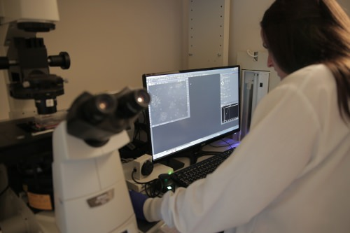 UW–Madison researchers monitor cancer-killing T-cells using fluorescence microscopy. STEPHANIE PRECOURT/UW-MADISON COLLEGE OF ENGINEERING